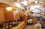 お花見できます、桜7~8分咲きです